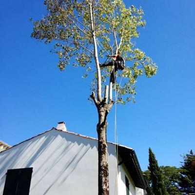 Abattage d'un chêne en rétention.